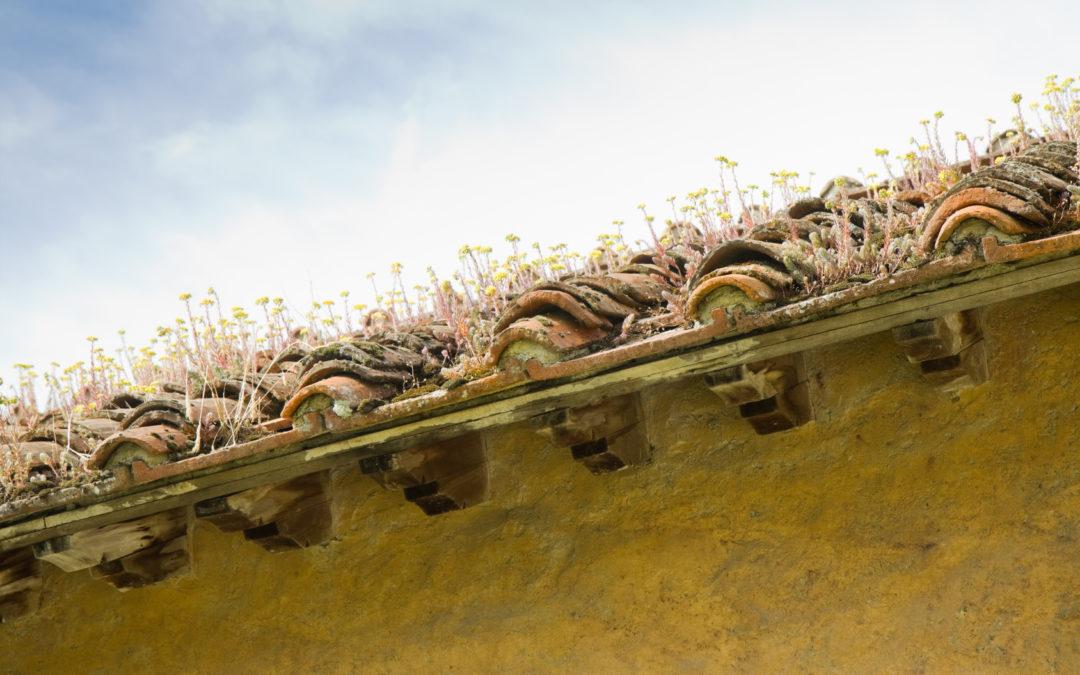 Comment faire face à l'infiltration toiture ?